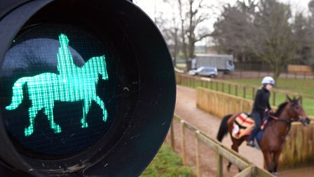 Horses pass a green light on a road crossing as they head out to the gallops at Newmarket
