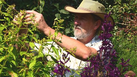 Tim Carter, horticulturalist in Noak Hill, tending to his plants. Picture: Ken Mears