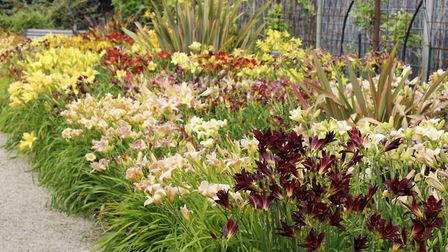 Tim specialises in plants suited to local conditions.