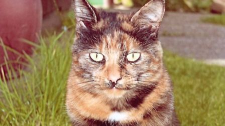 Sandy the cat has gone missing from the Rushmere area. Picture: Supplied