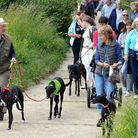 The Great Global Greyhound Walk was held in Pakefield on Sunday, June 19. Pictures: MICK HOWES