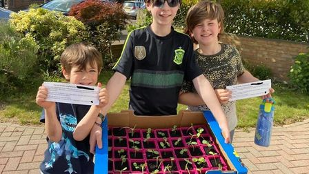 Jonah, Aron and Noah Tiller gifted all 50 of their neighbours with sunflower plants to cheer them up