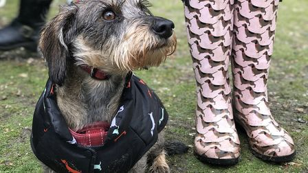 The PDSA is asking people to sign up for the World Big Dog Walk Challenge. Picture: Lauren De Boise