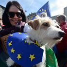A dog is carried by a pro-EU protester taking part in a March for Europe rally against Brexit in cen