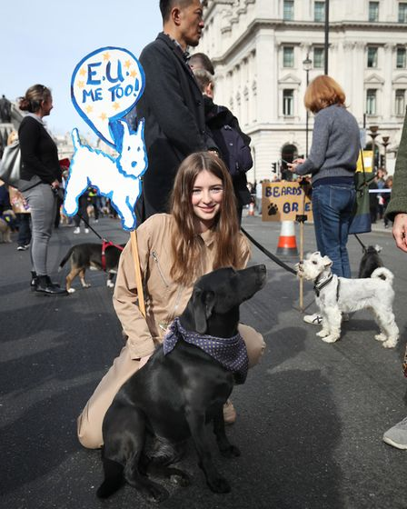 Photographs from the 'Wooferendum march' in central London where dog owners and their pets gather to
