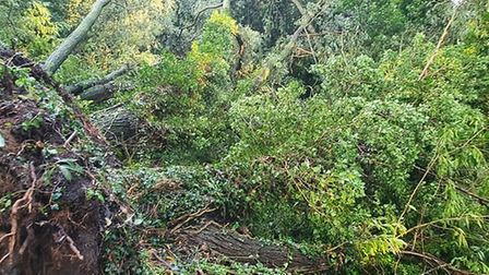 Downed trees blocking path beside the River Wensum in Norwich. Picture: Chloe Louise