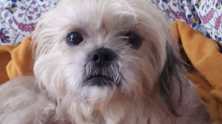Elsa the Shih Tzu is now doing well after being almost bald due to an extreme case of mange Picture: