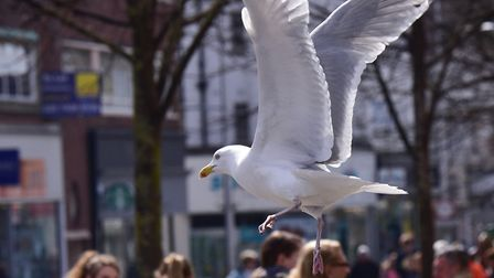 A seagull swoops in Lowestoft town centre. PHOTO: Nick Butcher