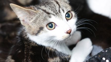 In 1939 an animal-loving burglar was finally captured after he was spotted letting a kitten out of o