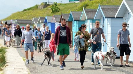 The greyhound walk in Pakefield. Pictures: Mick Howes