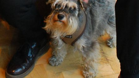 Miniature schnauzer Holly is often spotted snoozing in the window at Gary Ingham Salon in Hampstead.