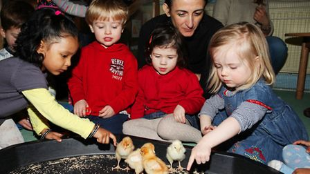 Independent Place Nursery children pet and play with chicks as they learn about Growth and Spring.