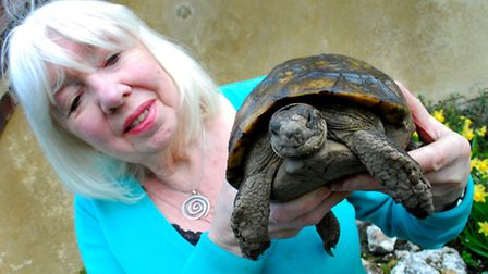 Carey Miller with Adolf the tortoise, who has finally come out of hibernation. Picture: Polly Hancoc