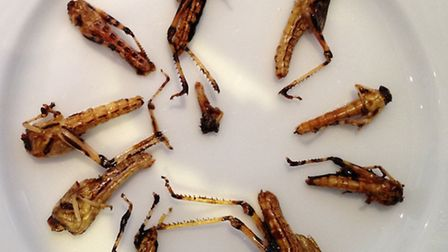 Locusts are a lesser known kosher treat