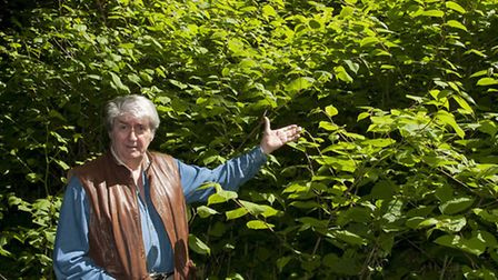A Japanese knotweed infestation has been found near the Hampstead homes of Tom Conti (pictured), Thi