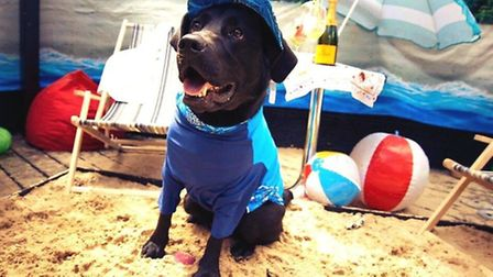 The canine beach party at Gaucho restaurant in Hampstead. Picture: Eliana Pelaggi