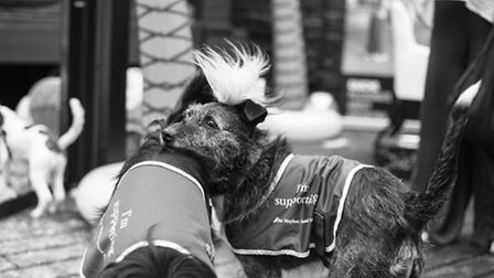 The fundraising event on Sunday benefitted The Mayhew Animal Home Picture: Penelope Malby Photograph
