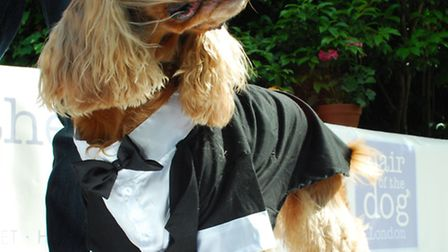 This dog dressed at James Bond lost out to Otis, who had a frog costume. Picture: Polly Hancock