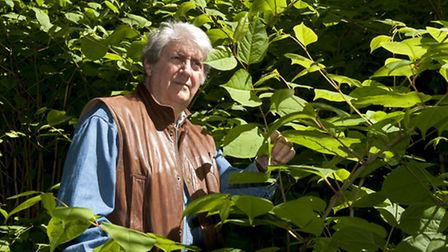 Actor Tom Conti with Japanese Knotweed infestation at Branch Hill earlier this month. Picture: Nigel