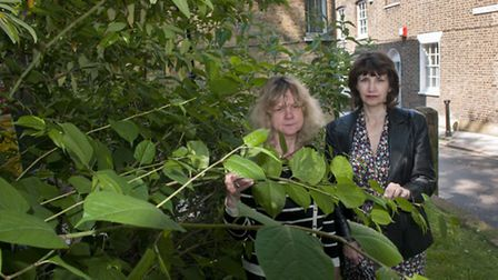 Amanda Blinkhorn and Liz Payne have found Japanese knotweed plants growing on a site where 30 houses