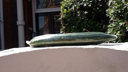 One of the cucumbers was left on a wall outside someone's home. Picture: Jacob Weinstein