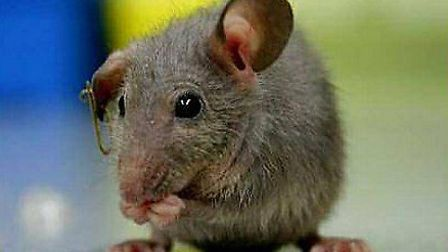 Hackney comes fourth in the UK for the number of call-outs for mouse infestations