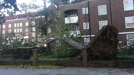 Residents were temporarily left homeless after a tree fell through their roof in Stamford Hill