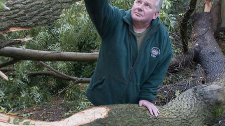 Hampstead Heath superintendent Simon Lee with one of around 100 trees ripped apart on the Heath by t