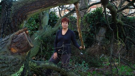 Julia Hsiung with the fallen Oak tree. Picture: Polly Hancock