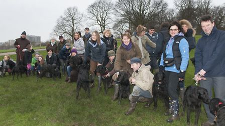 Flat Coated Retrievers meeting at Parliament Hill. Picture: Nigel Sutton