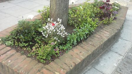 The flowerbeds in bloom before council workers had ripped them up