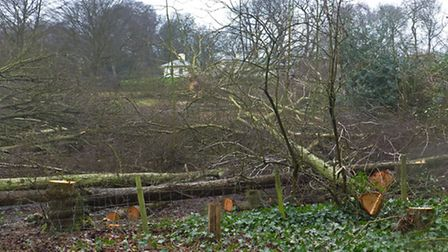 Trees at Kenwood being felled to restore historic view to the lake. Picture: Nigel Sutton