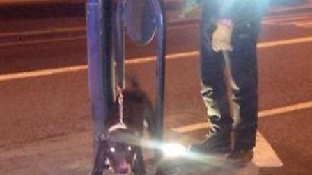 The pitbull dog which attacked a man in Stamford Hill after it had been tied to a lam post by Vince