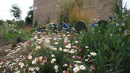 Wildflowers this week at the Clapton Park Estate.