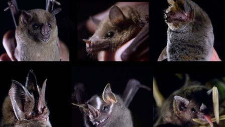 A selection of bats from across Mexico that Rodrigo encountered during the making of the film. Photo