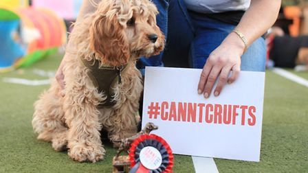Liza Morgan and cavapoo Harvey win the Best In Show at the Cannt Crufts dog show at the Queen of Hox