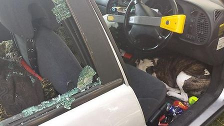 Police smashed a car window to free the hot hound Pic: @MPSBrownswood