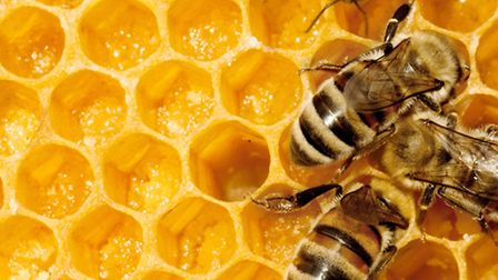 bee hive close up