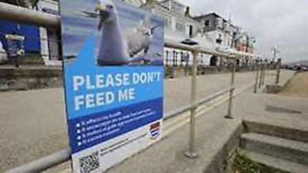 This sign deterring people from feeding the seagulls in Lyme Regis. After seeing people still feedin