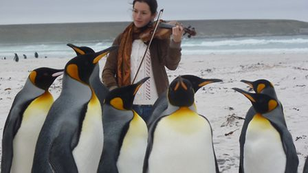 Jamie Hutchinson playing to penguins in the Falklands