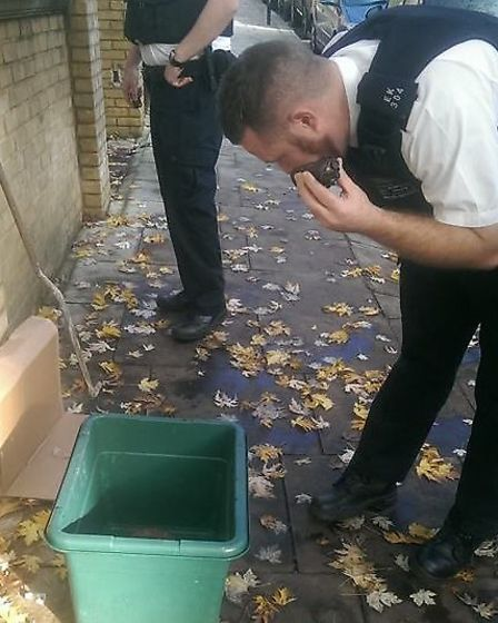 A police officers cautiously inspects the reptile
