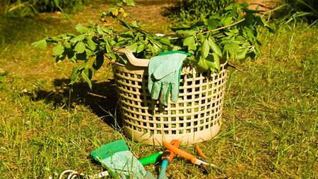 Garden rubbish ready for composting. PA Photo/Thinkstockphotos.