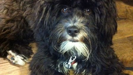 Missing: Sociable Rocky hasn't been seen for almost a week
