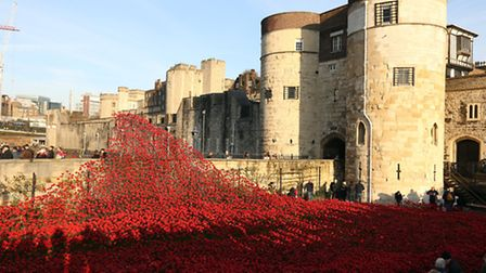 Volunteers among ceramic poppies from the Blood Swept Lands and Seas of Red installation at the Towe