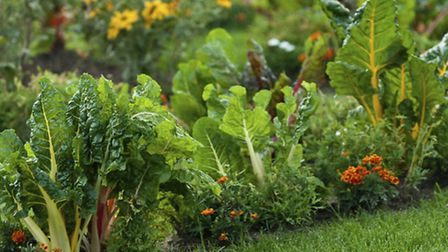 A garden with leafy vegetables and bright colored flowers. PA Photo/thinkstockphotos