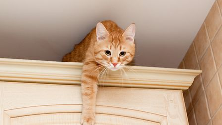 Clearing high up spaces for cats can help reduce their stress levels
