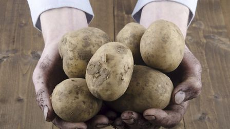 Potatoes. See PA Feature GARDENING Gardening Column. Picture credit should read: PA Photo/thinkstock