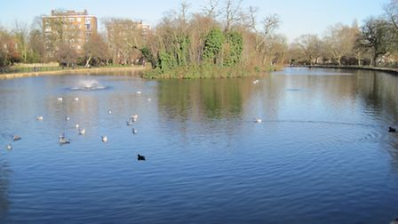 """What """"voracious predators"""" lurk in the beautiful ponds at Clissold Park? [Photograph by Jenny Mastan"""