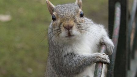 Squirrels can cause havoc in gardens. PA Photo/thinkstockphotos.