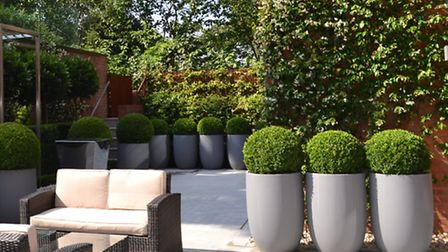 Potted plants in Hampstead